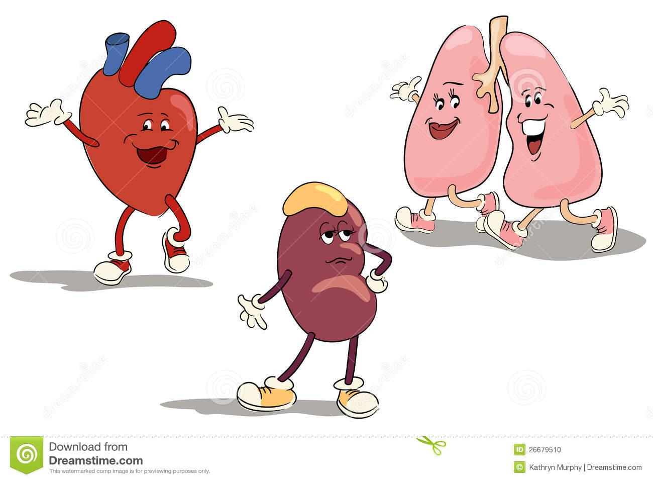 Image result for images of happy internal organs