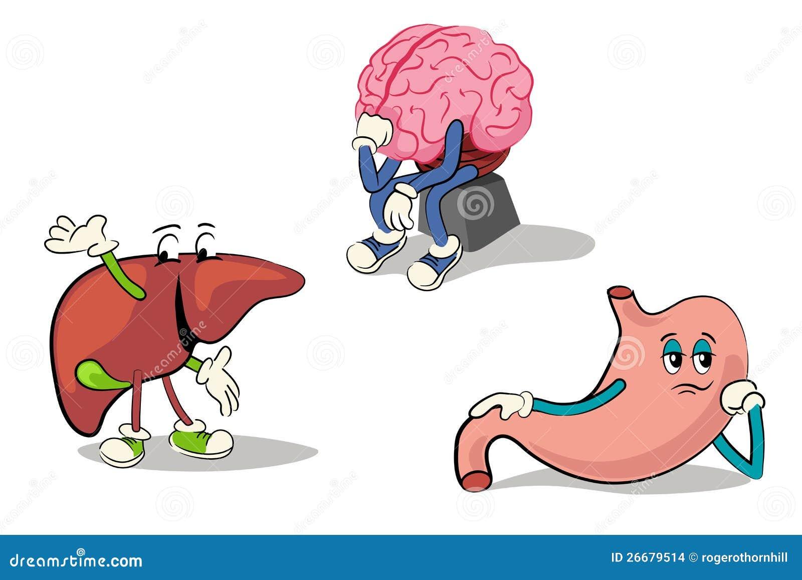 Orgãos internos do corpo humano