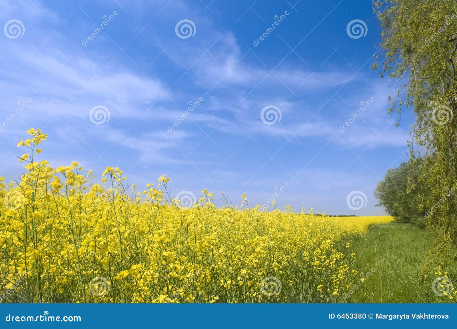 Charakter rolnictwa krajobrazu lato