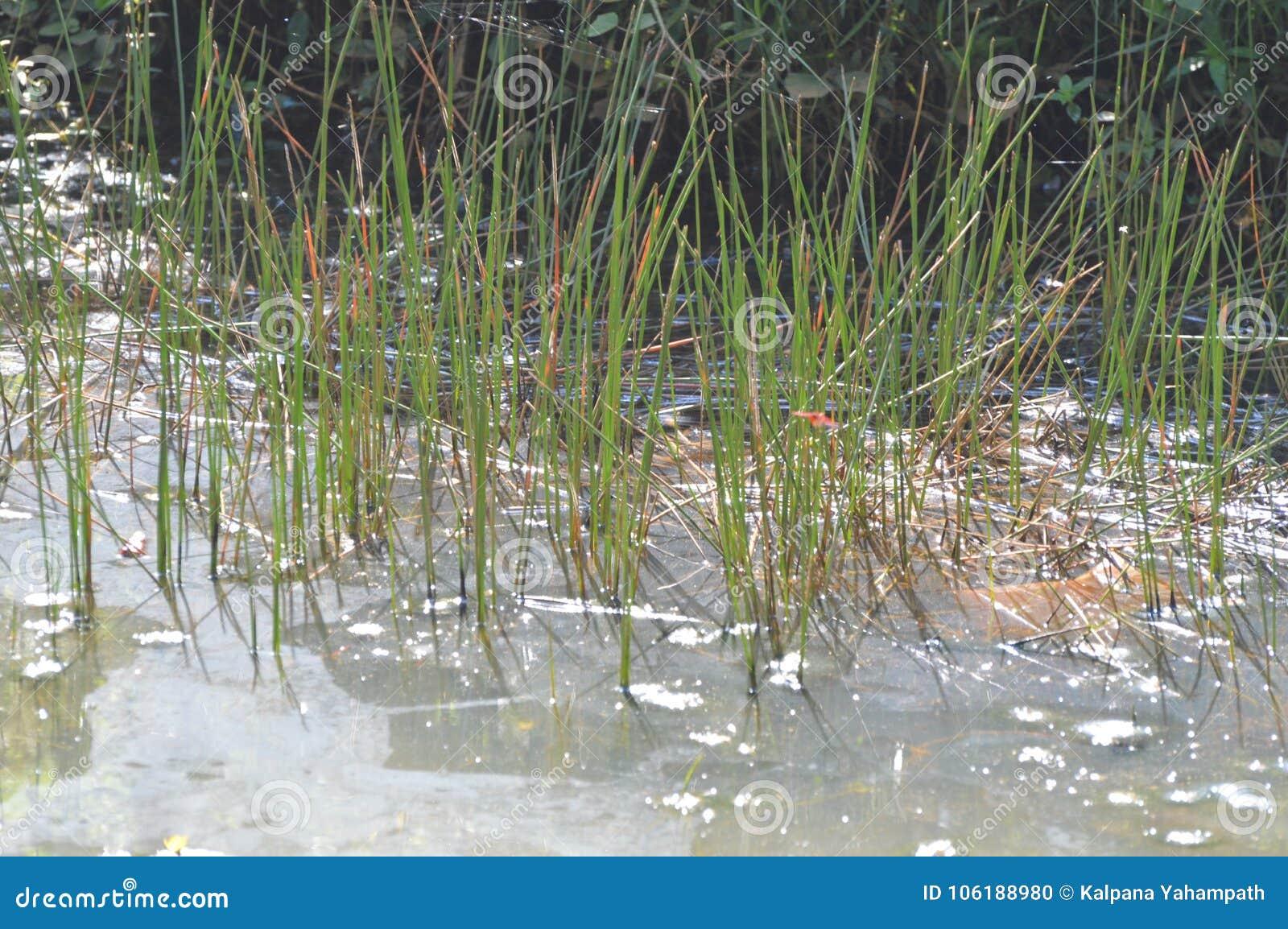 Charca en tierra mojada