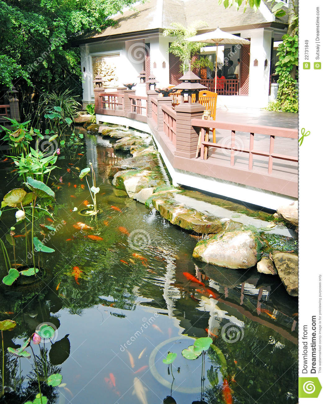 Charcas de koi im genes de archivo libres de regal as for Charcas de jardin