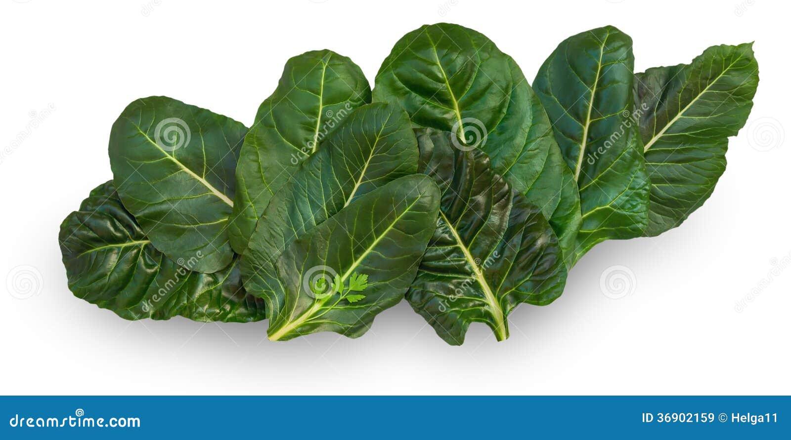 Chard liście
