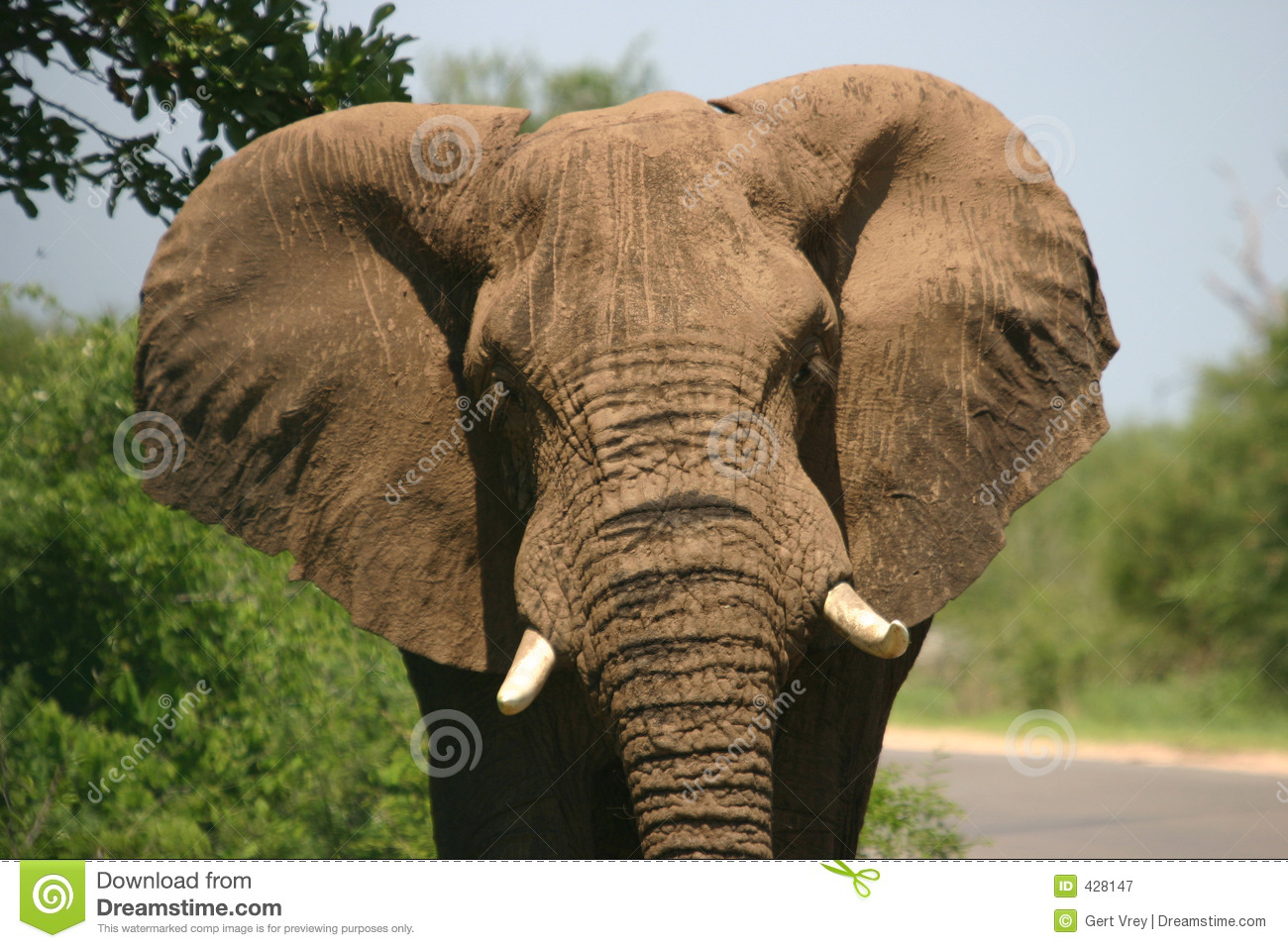 This elephant photo is not a Photo by Ramona Heiner