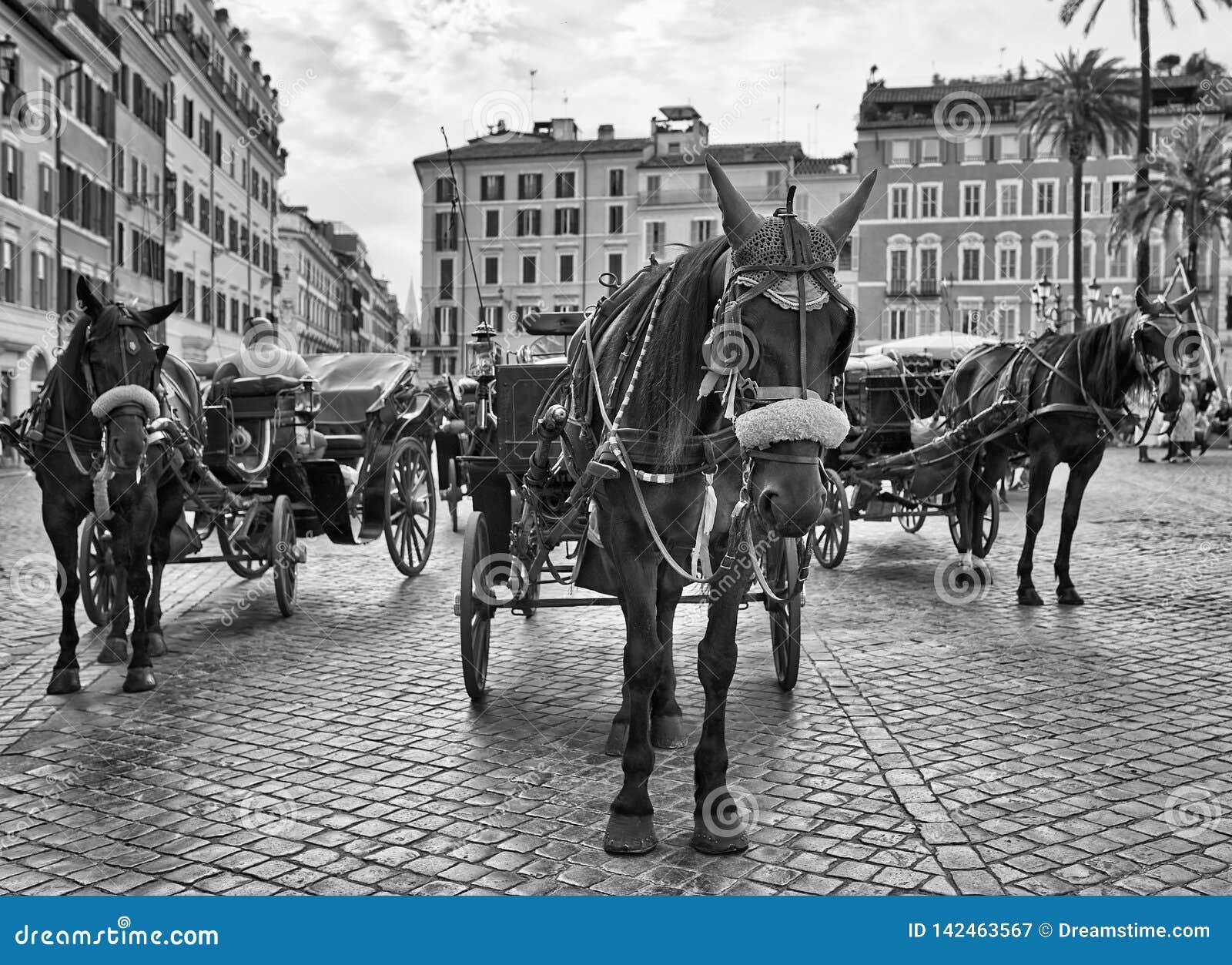 Chariot espagnol de cheval d étapes noir et blanc