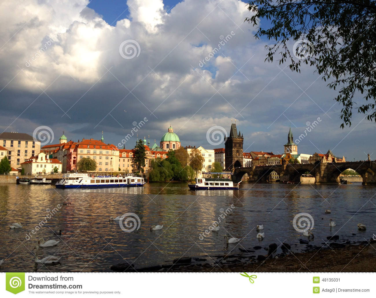 Charles Bridge In Prague Wit Swans In Front Editorial Photo Image 48135031