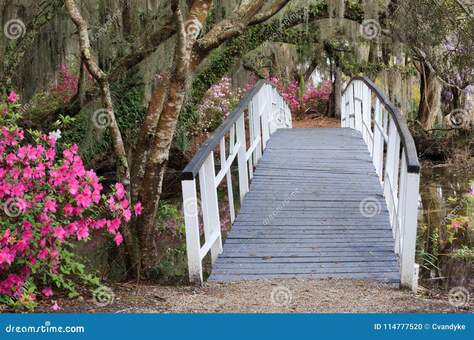Am Charleston Sc-Magnolien-Garten im Frühjahr kreuzen