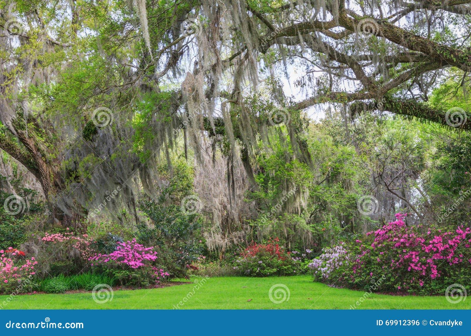 Charleston South Carolina Romantic Garden Eichen Azaleen Moos