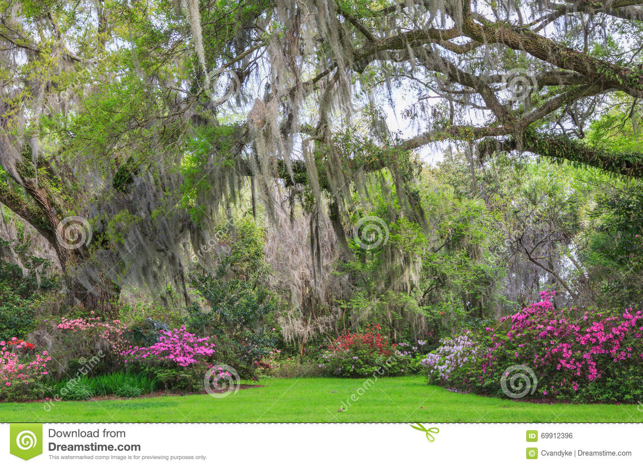 Charleston south carolina romantic garden oak trees for Landscaping plants south carolina