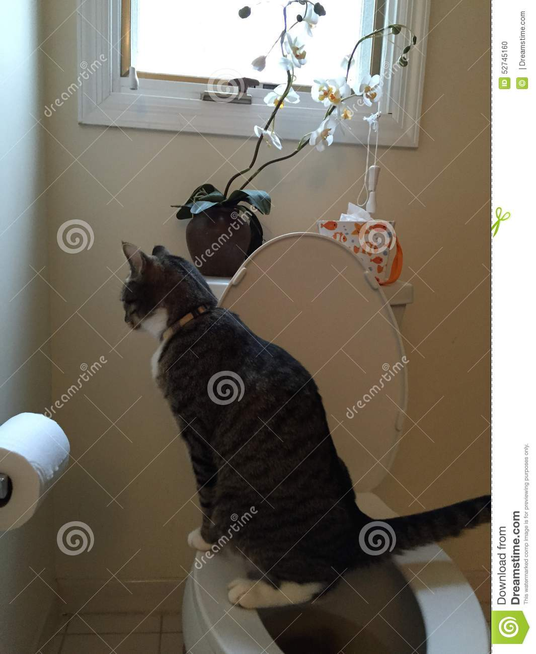 Charlie Cat Urinating On Toilet Stock Photo - Image of ...