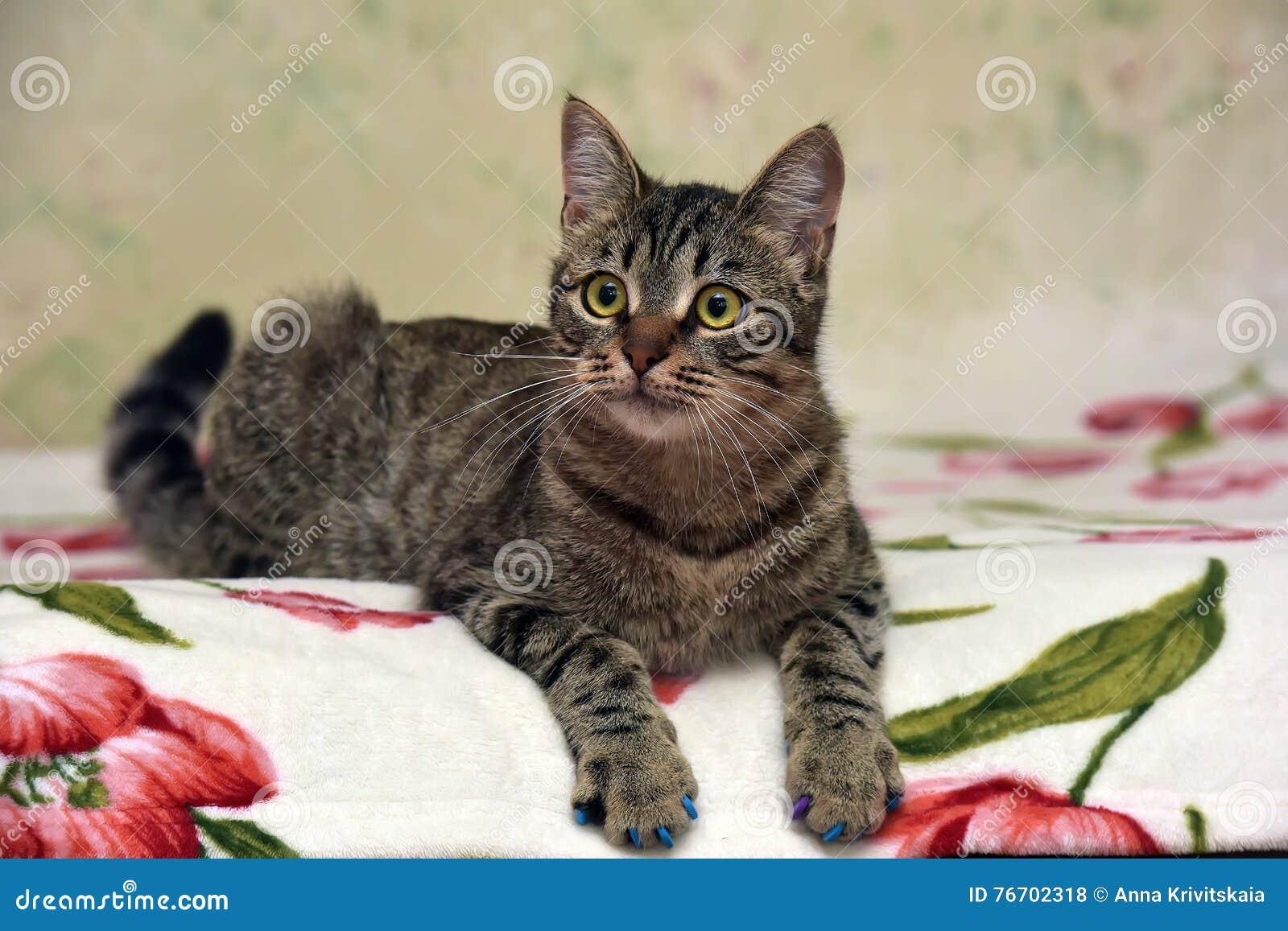 Charma den randiga katten