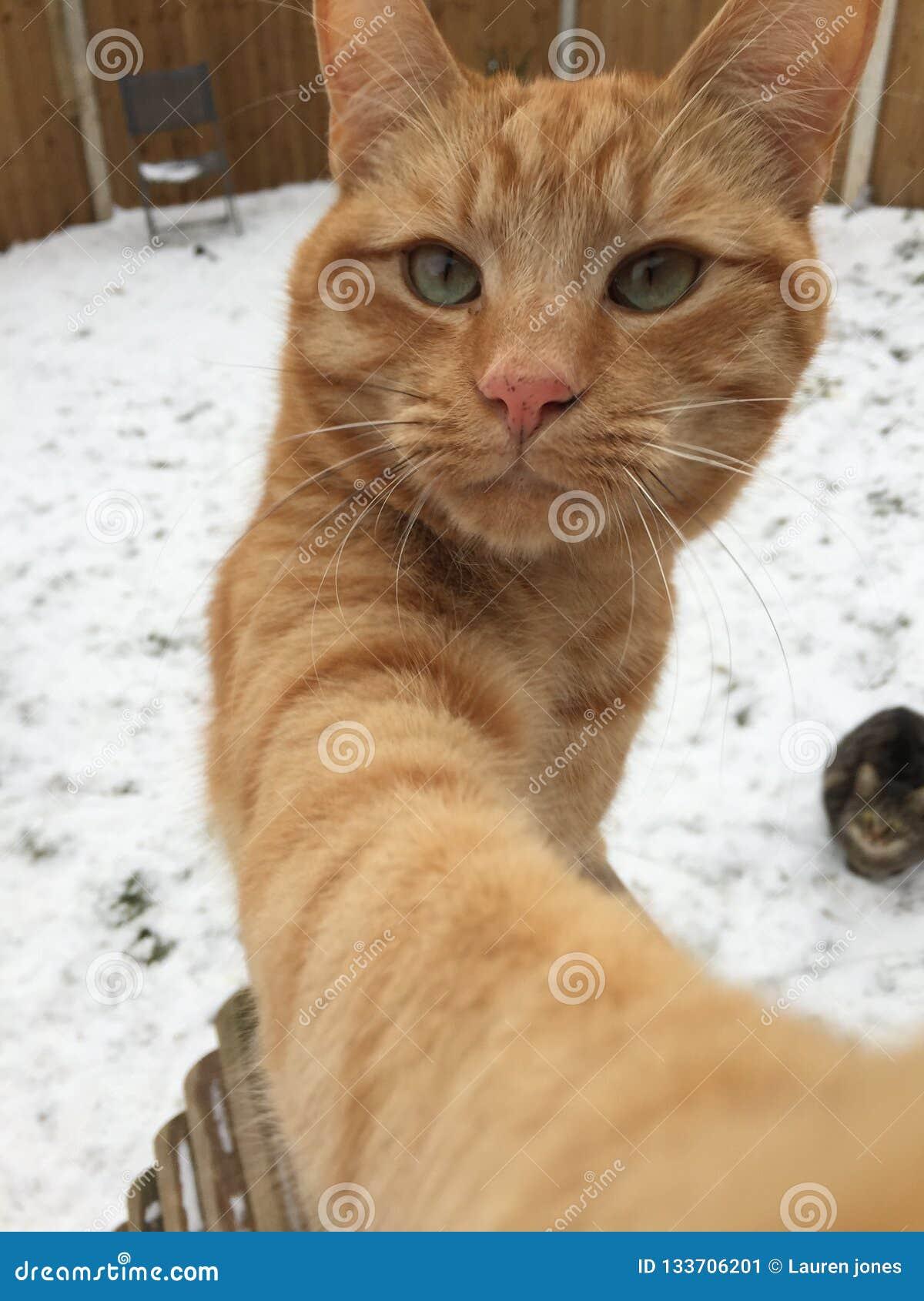 Charmeurkat in sneeuw