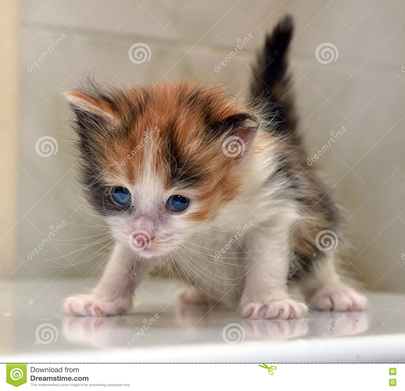cat nasal congestion home treatment