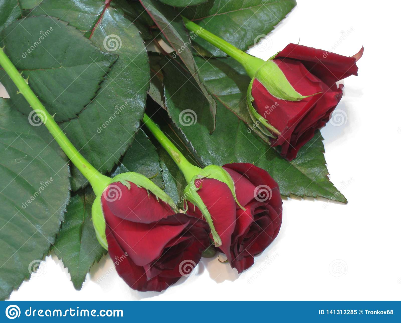 Spring, summer, velvety rose petals excite the imagination and attract the eye