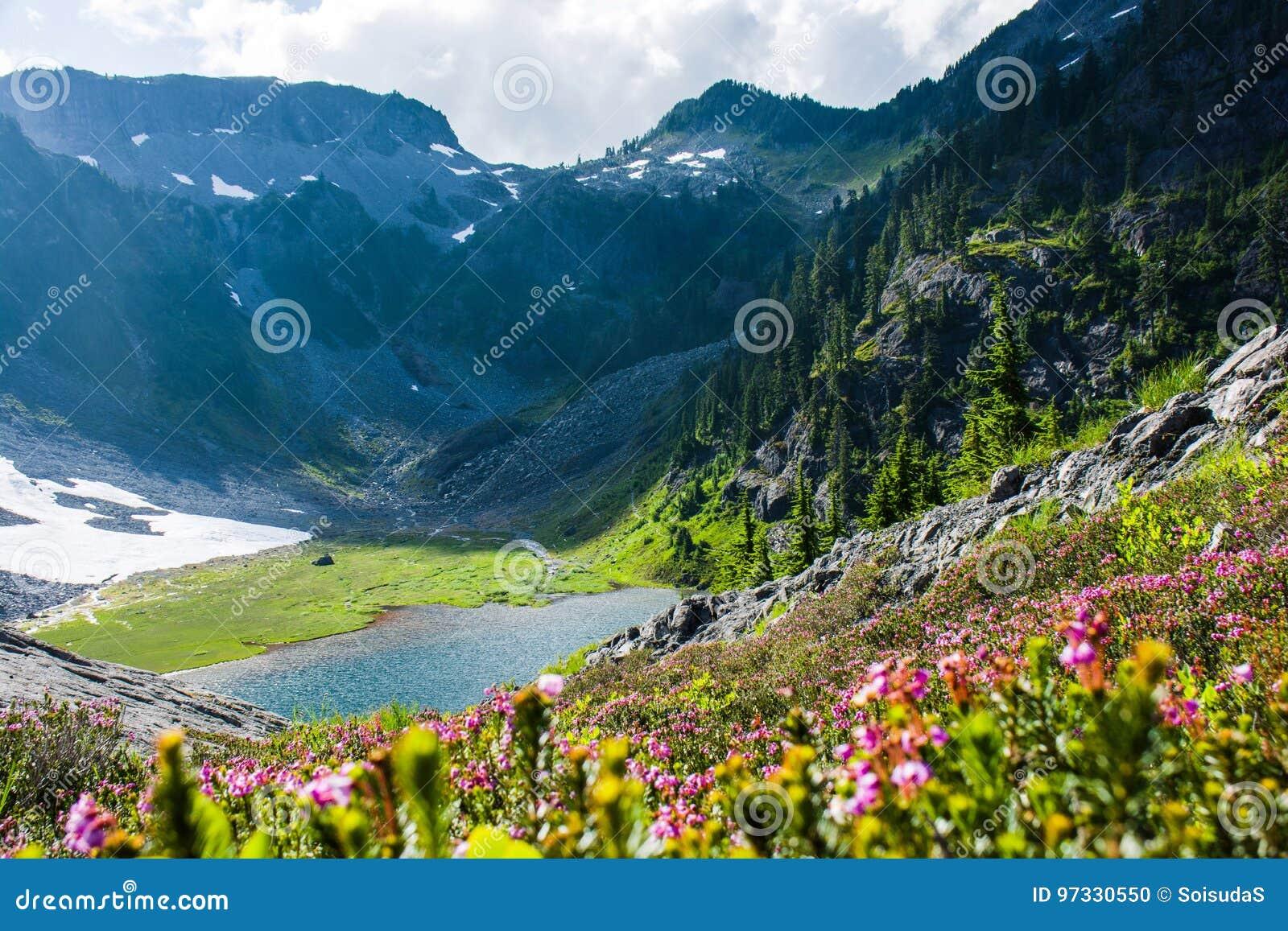 A charneca azul floresce com as montanhas e o Austin Pass Lake