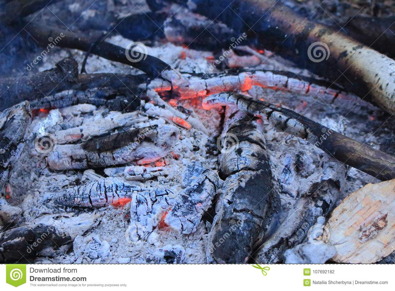 Charred Wood With Charcoal And Grey Ash In Bonfire Closeup