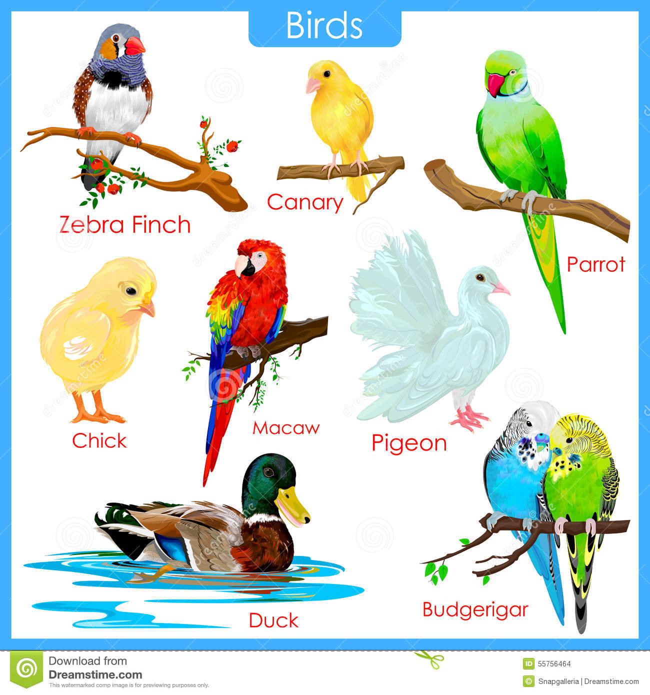 Chart Of Colorful Birds Stock Vector Illustration Of