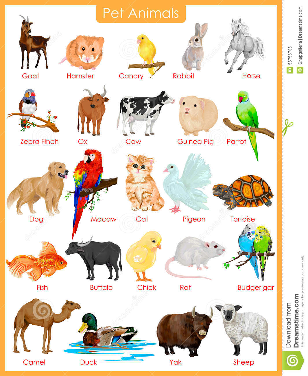 Stock Illustration Chart Pet Animals Easy To Edit Vector Illustration ...