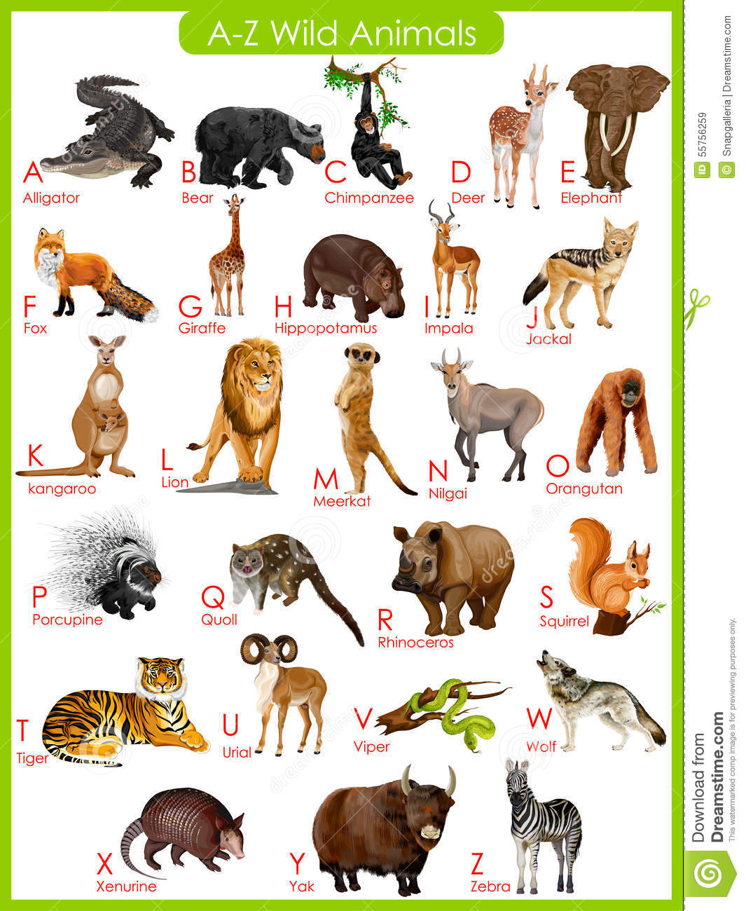 Stock Illustration Chart To Z Wild Animals Easy Edit Vector Illustration Image55756259 on Kindergarten Worksheet With U