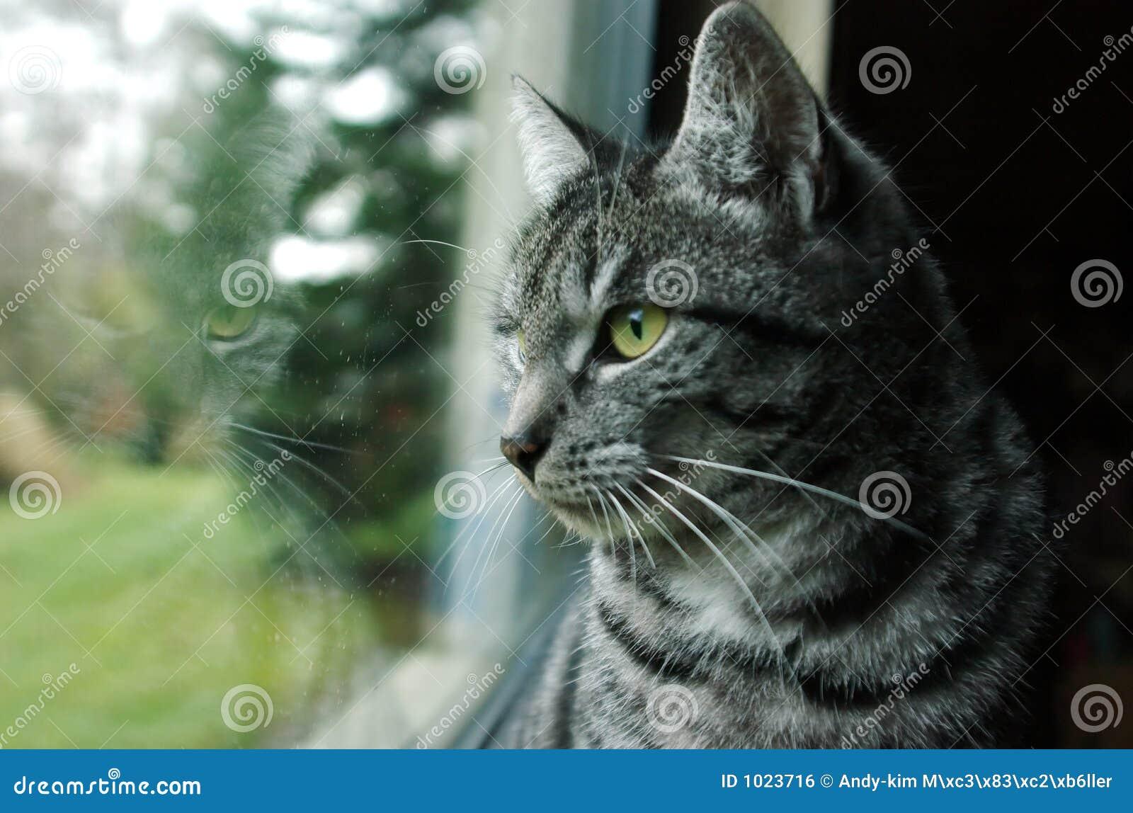 Chat à l hublot