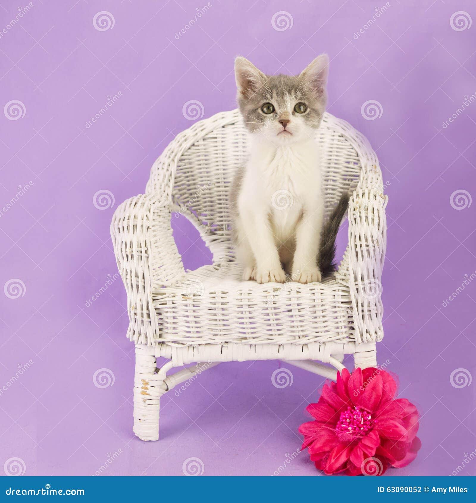 Download Chat photo stock. Image du gris, mignon, pourpré, blanc - 63090052