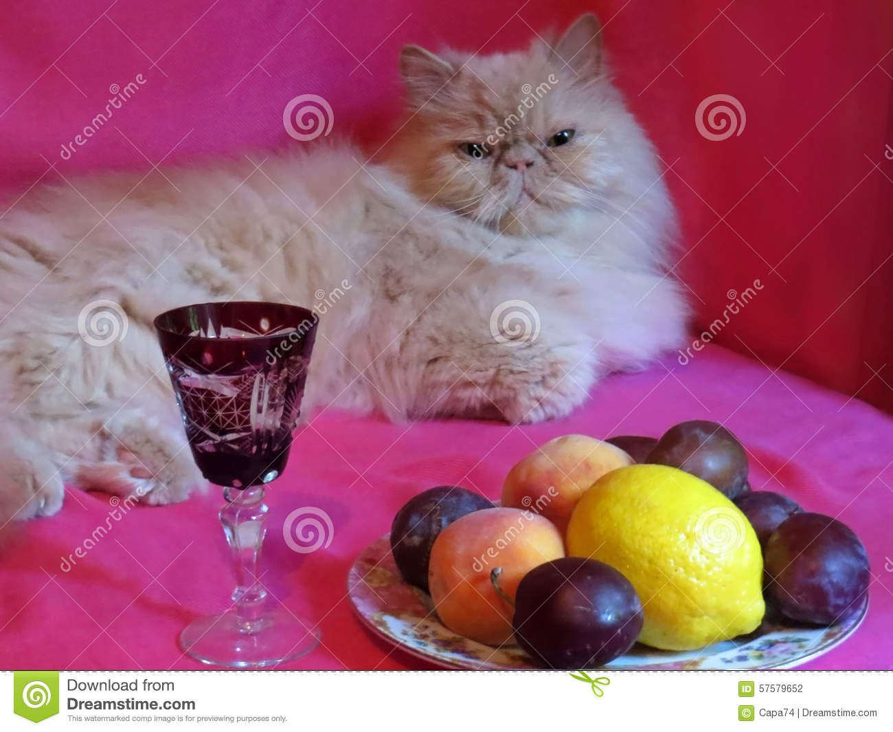 Chat adulte persan