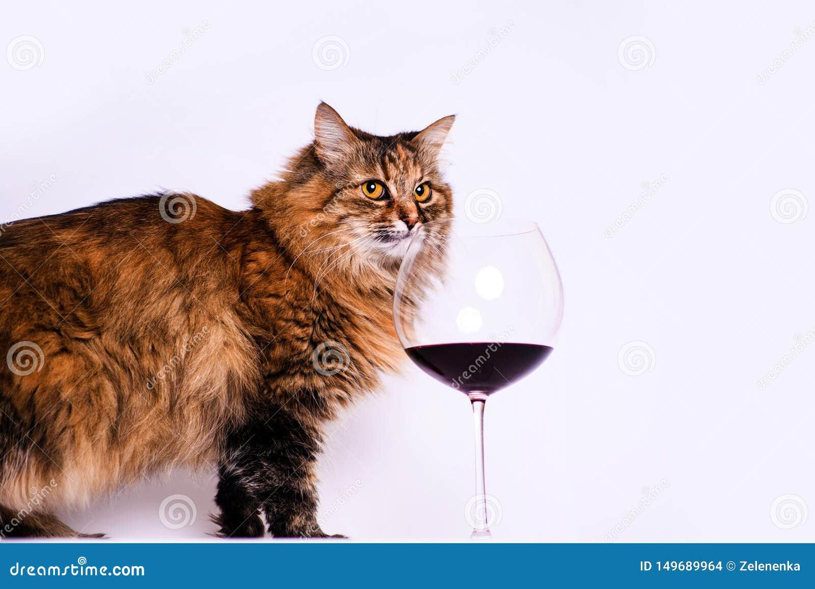 Chat Amusant Et Un Verre De Vin Rouge Photo stock Image du