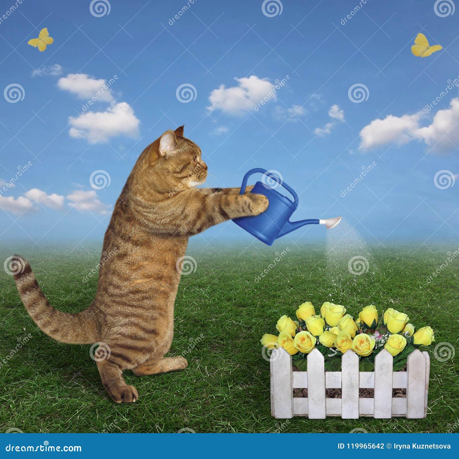 Chat arrosant les roses jaunes
