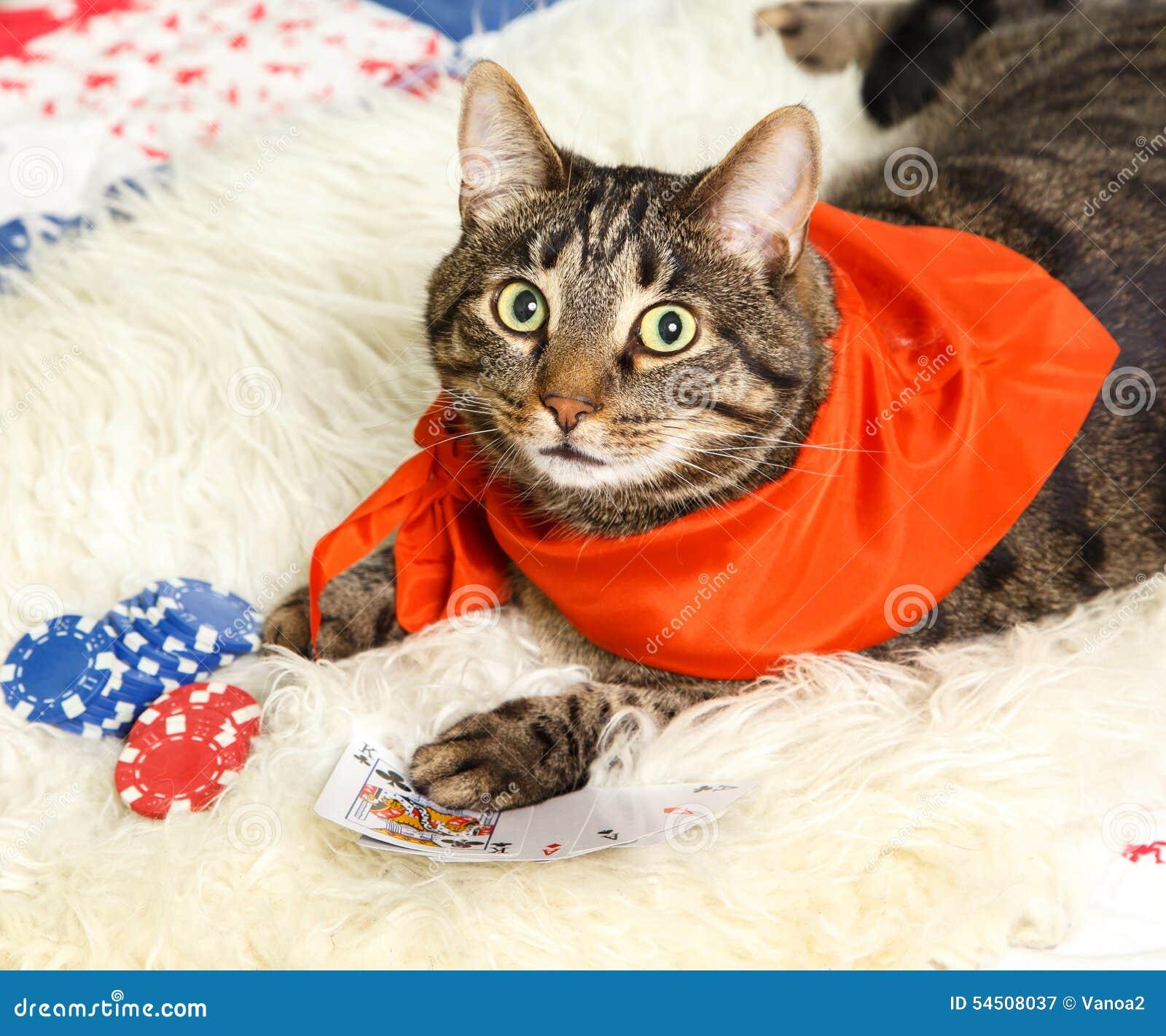 Chat attrapé jouant le jeu restreint