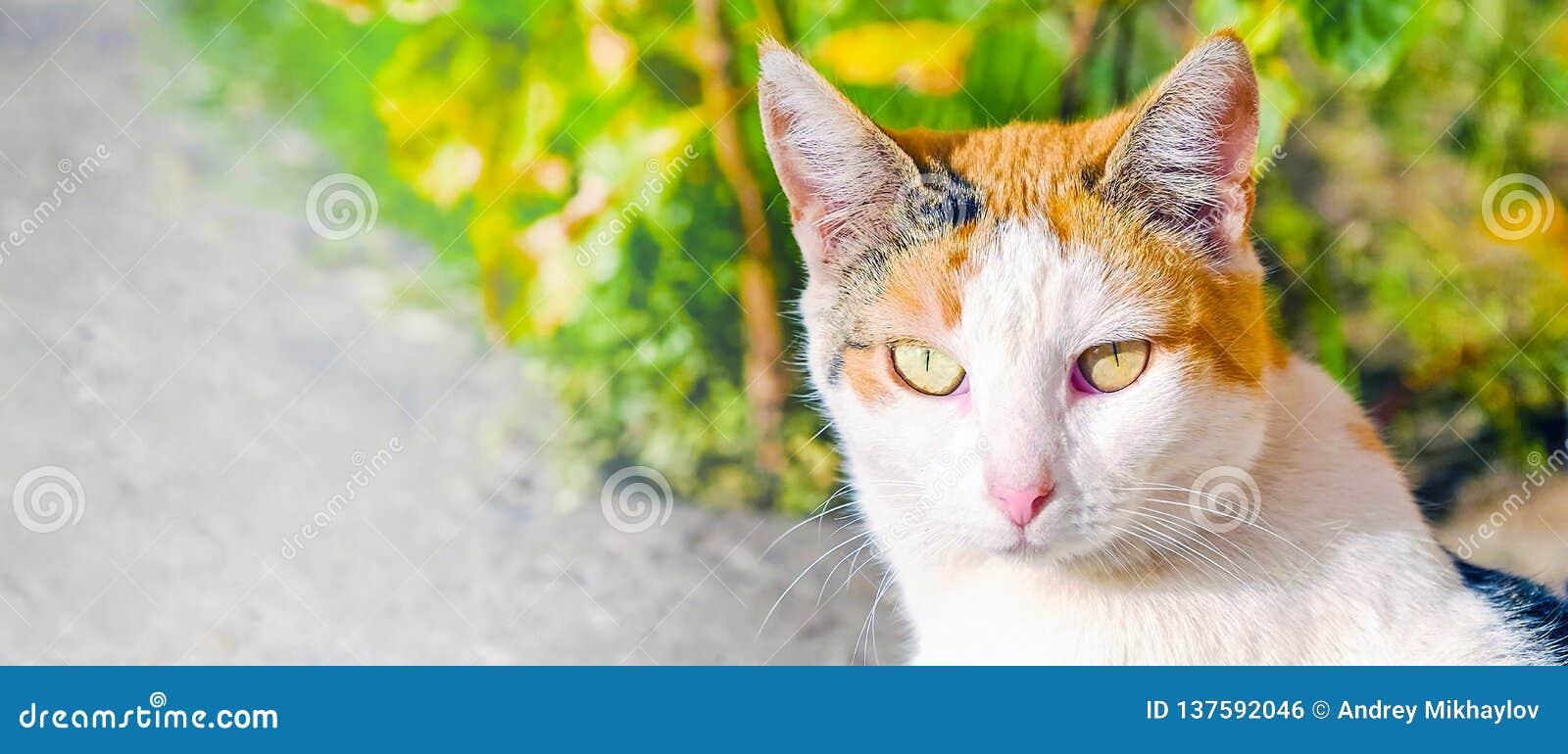 Chat aux yeux grands avec du charme appréciant le soleil Portrait d un chat regardant directement dans l appareil-photo