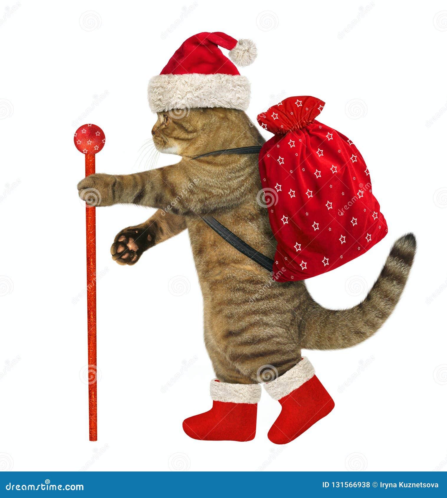 Chat avec des cadeaux de Noël