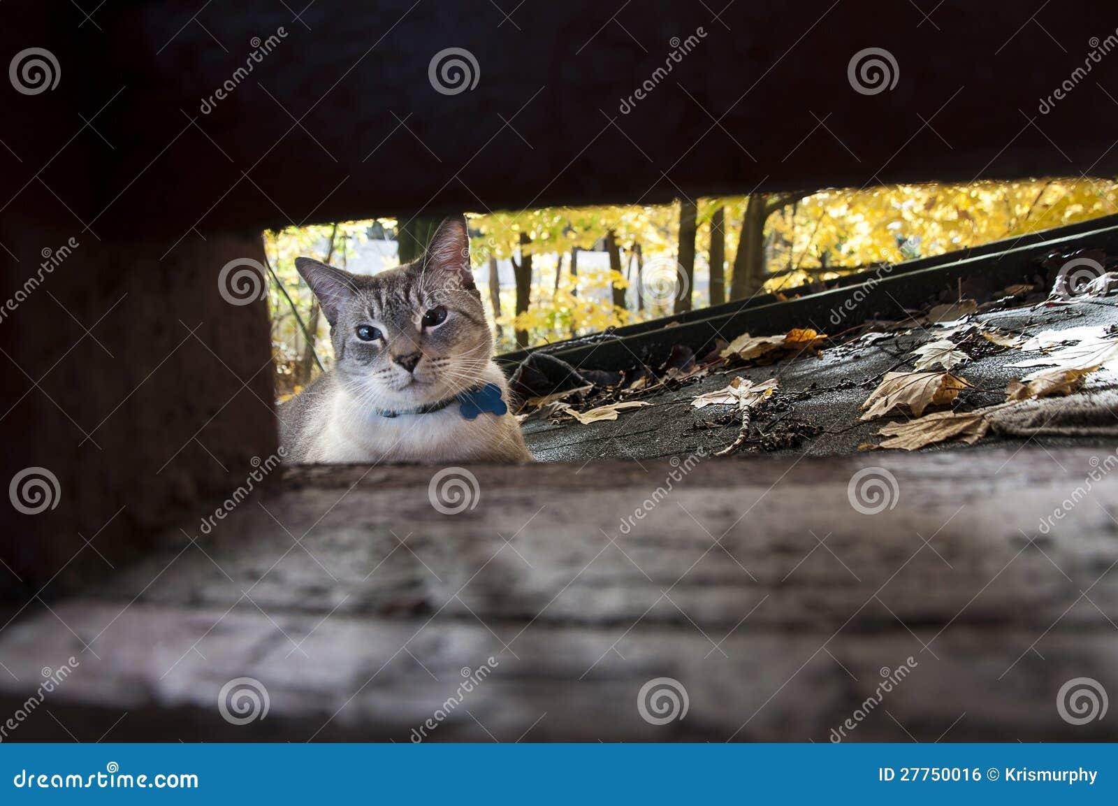 Chat avec des lames d automne
