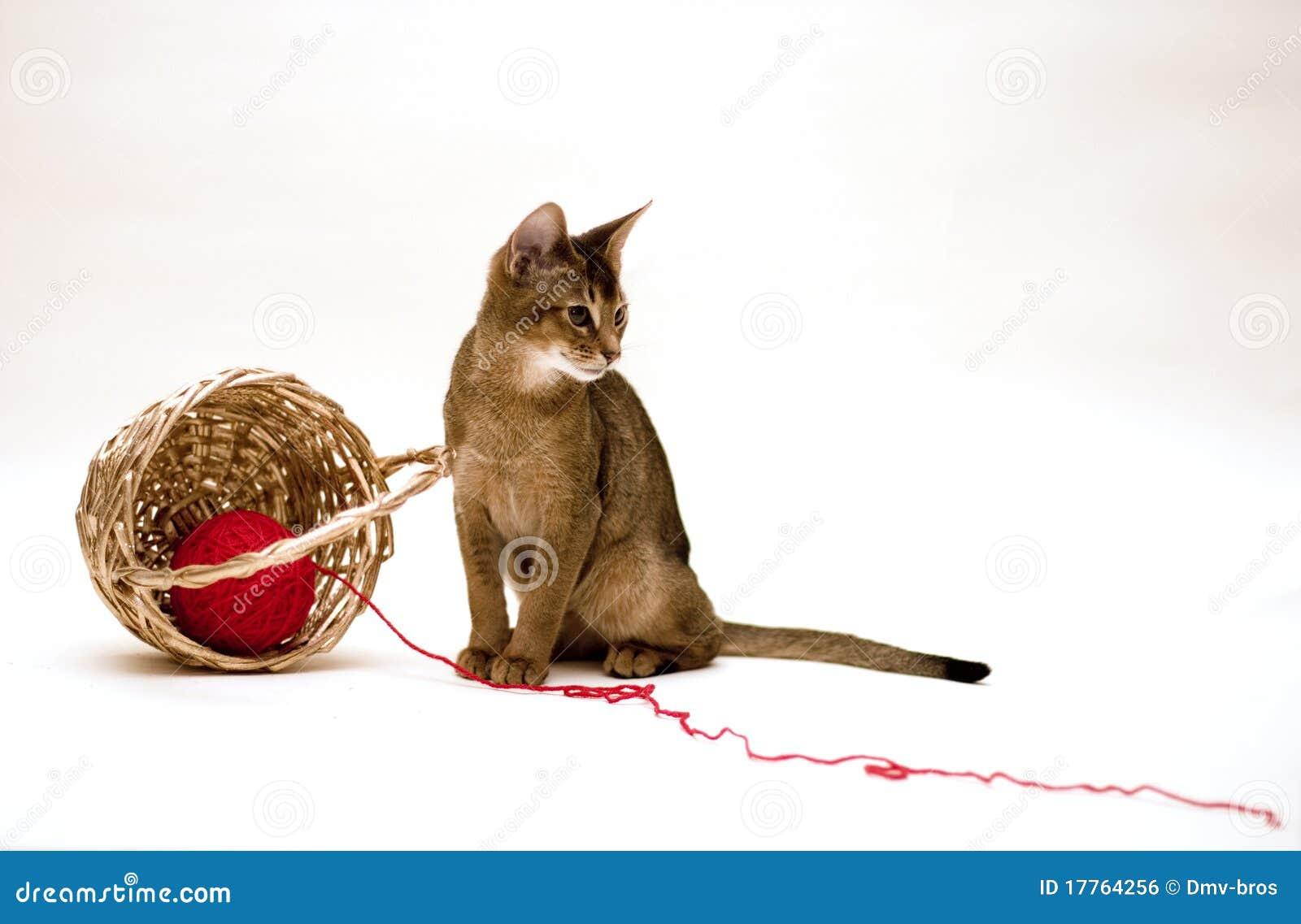 Chat avec la boucle et le panier
