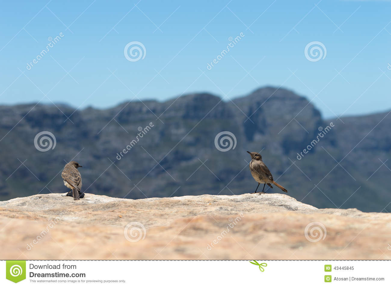 chat birds stock image image of wild western peak 43445845