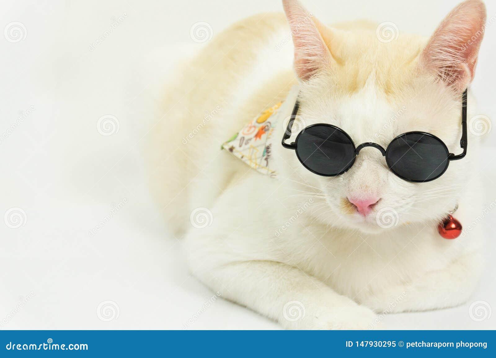 Chat blanc avec un fond blanc