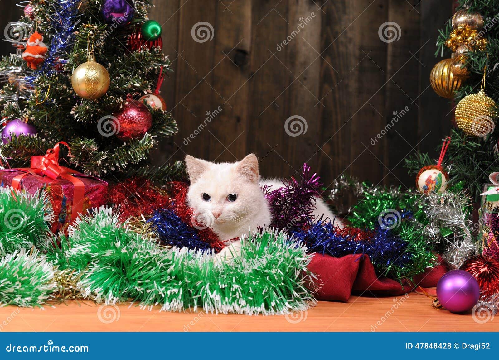 chat blanc jouant l 39 arbre de no l photo stock image du. Black Bedroom Furniture Sets. Home Design Ideas