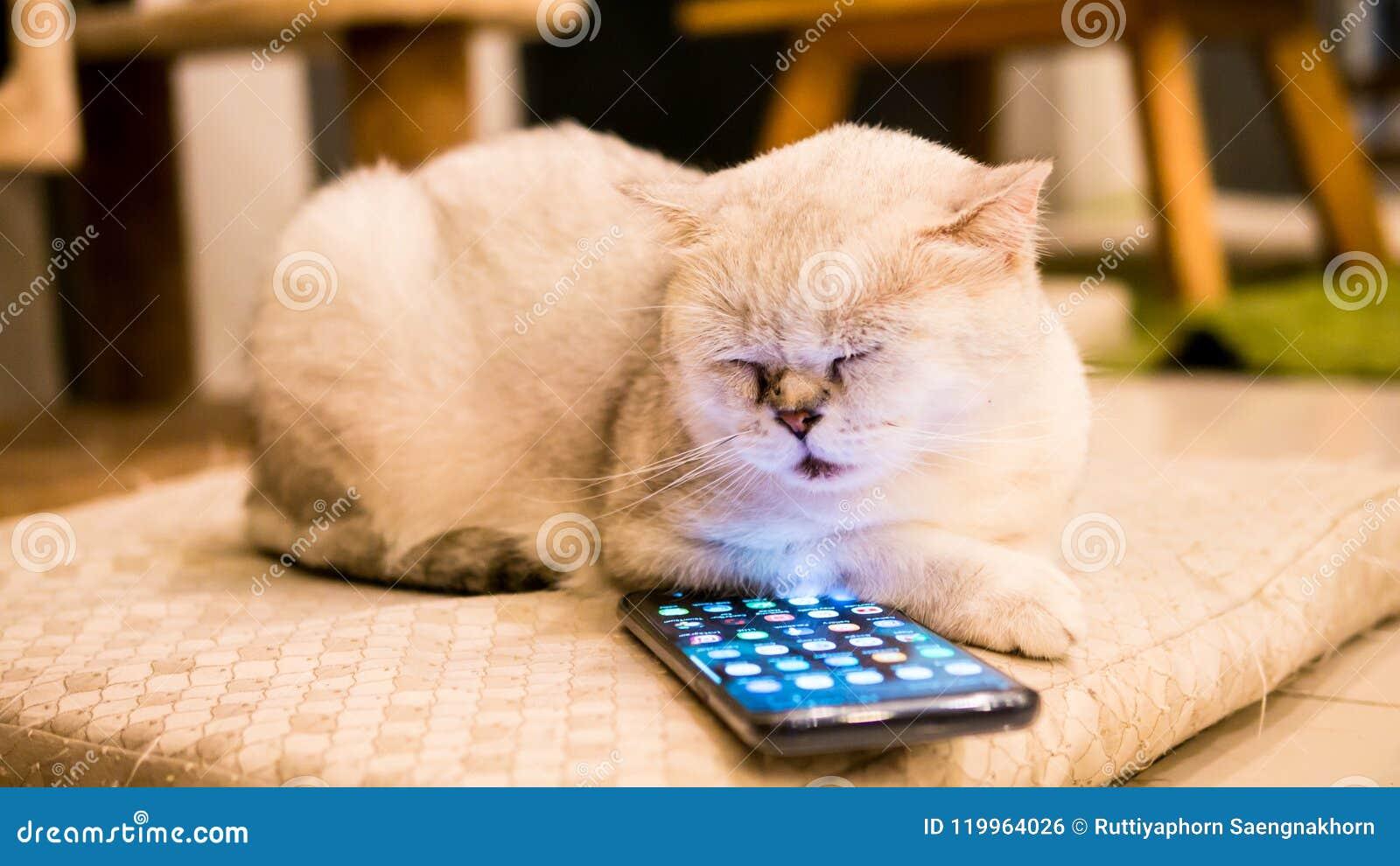 Chat blanc pelucheux jouant avec le smartphone Samsung S9 plus intéressant et regardant sur l écran