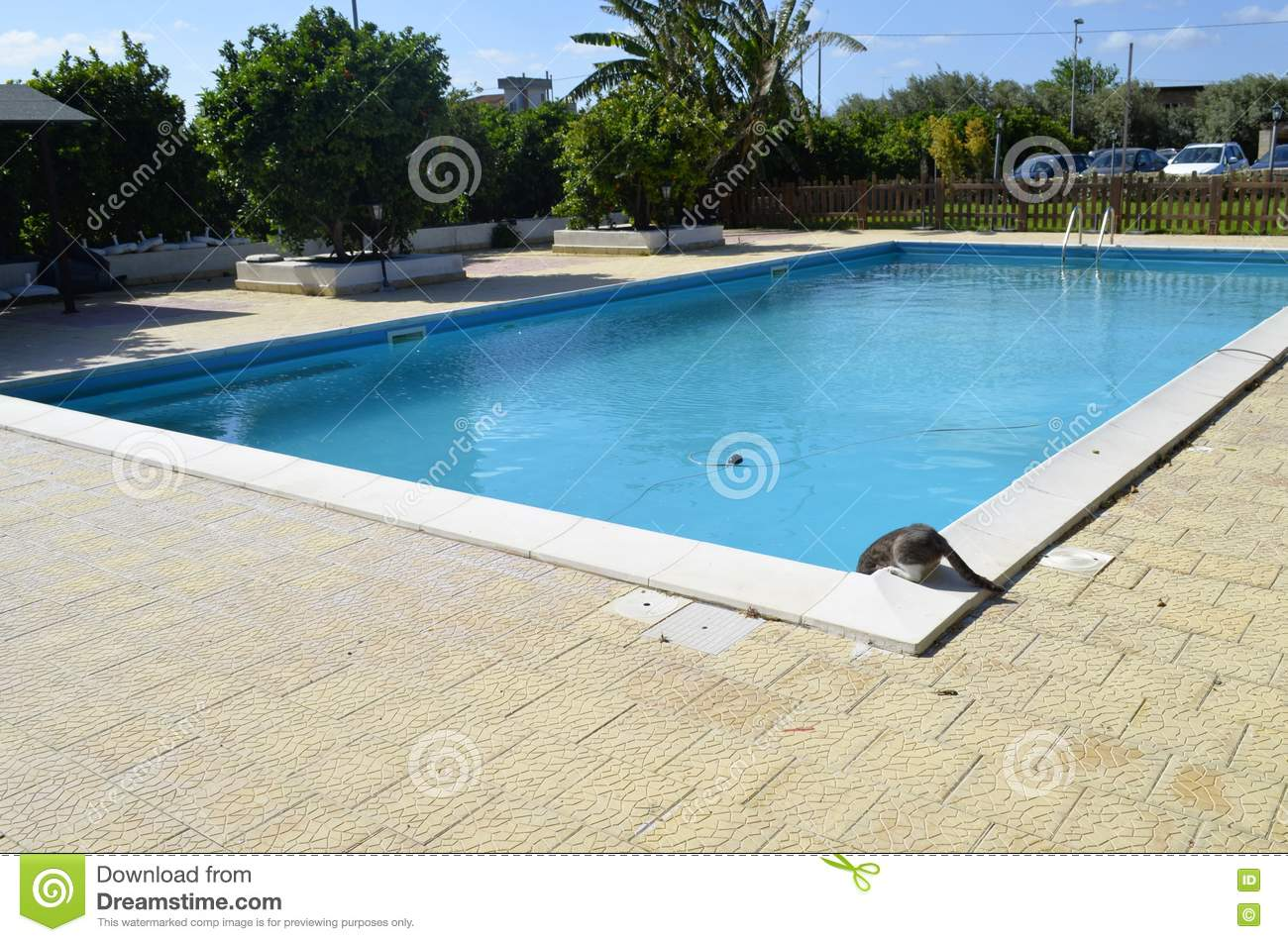 Chat buvant dans la piscine photo stock image 70577036 for Apprendre a plonger dans la piscine