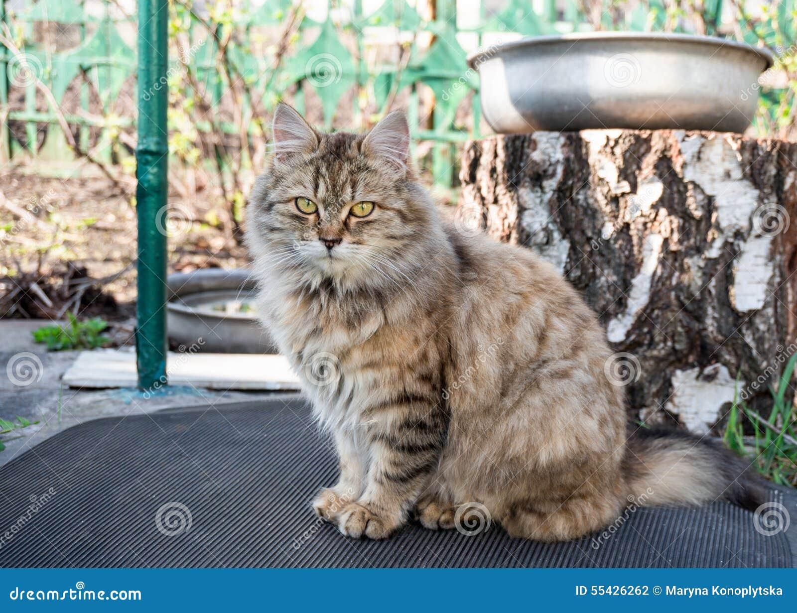 chat dans le jardin photo stock image du home toilett 55426262. Black Bedroom Furniture Sets. Home Design Ideas