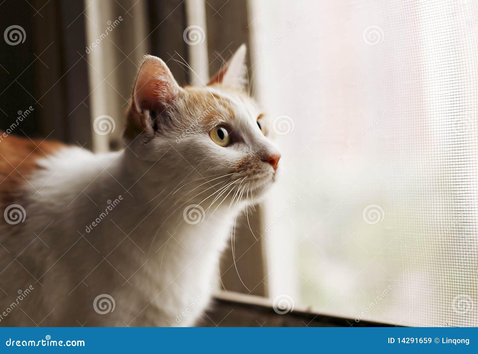 Chat dans le windowsill