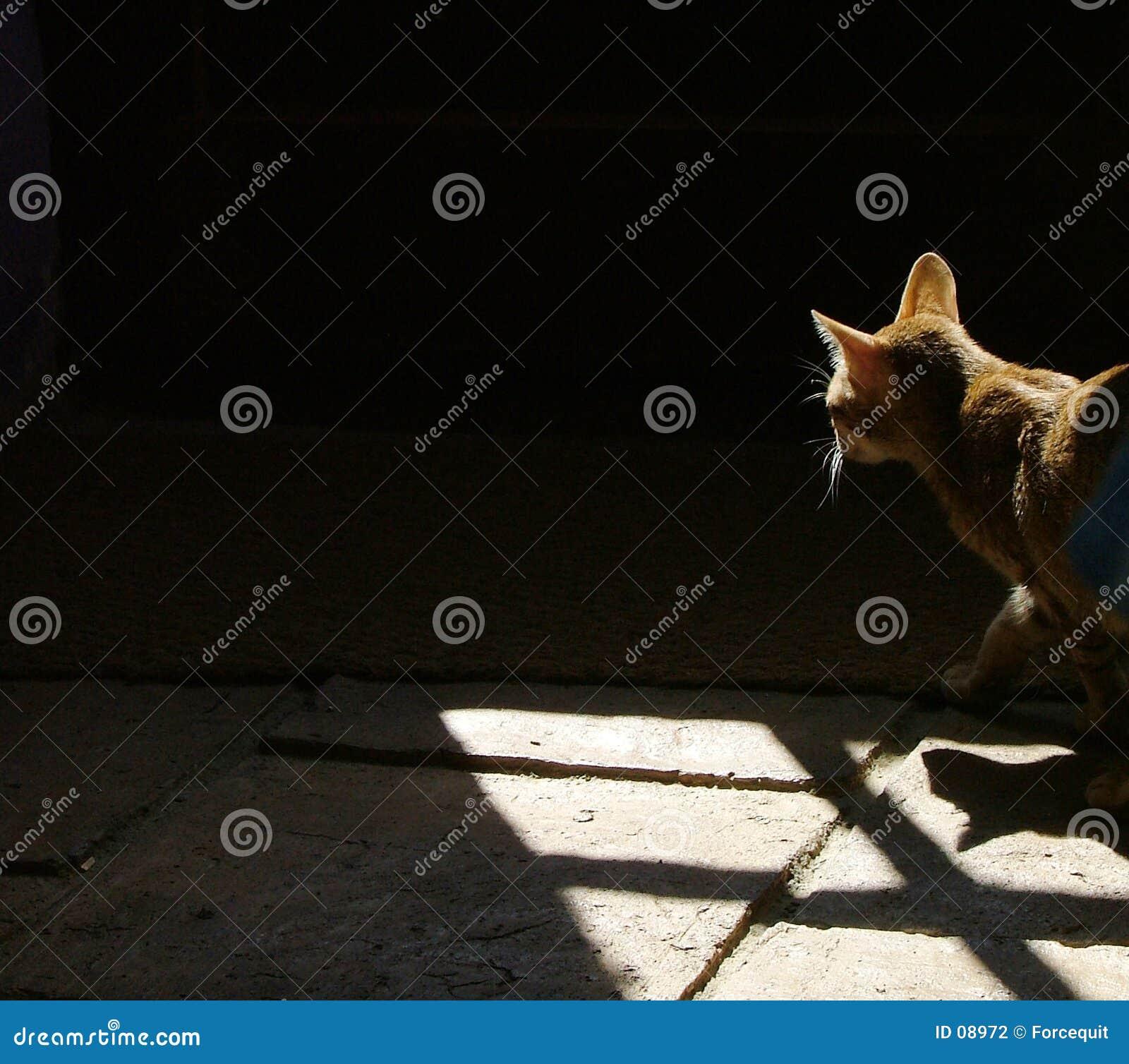 Chat dans les ombres