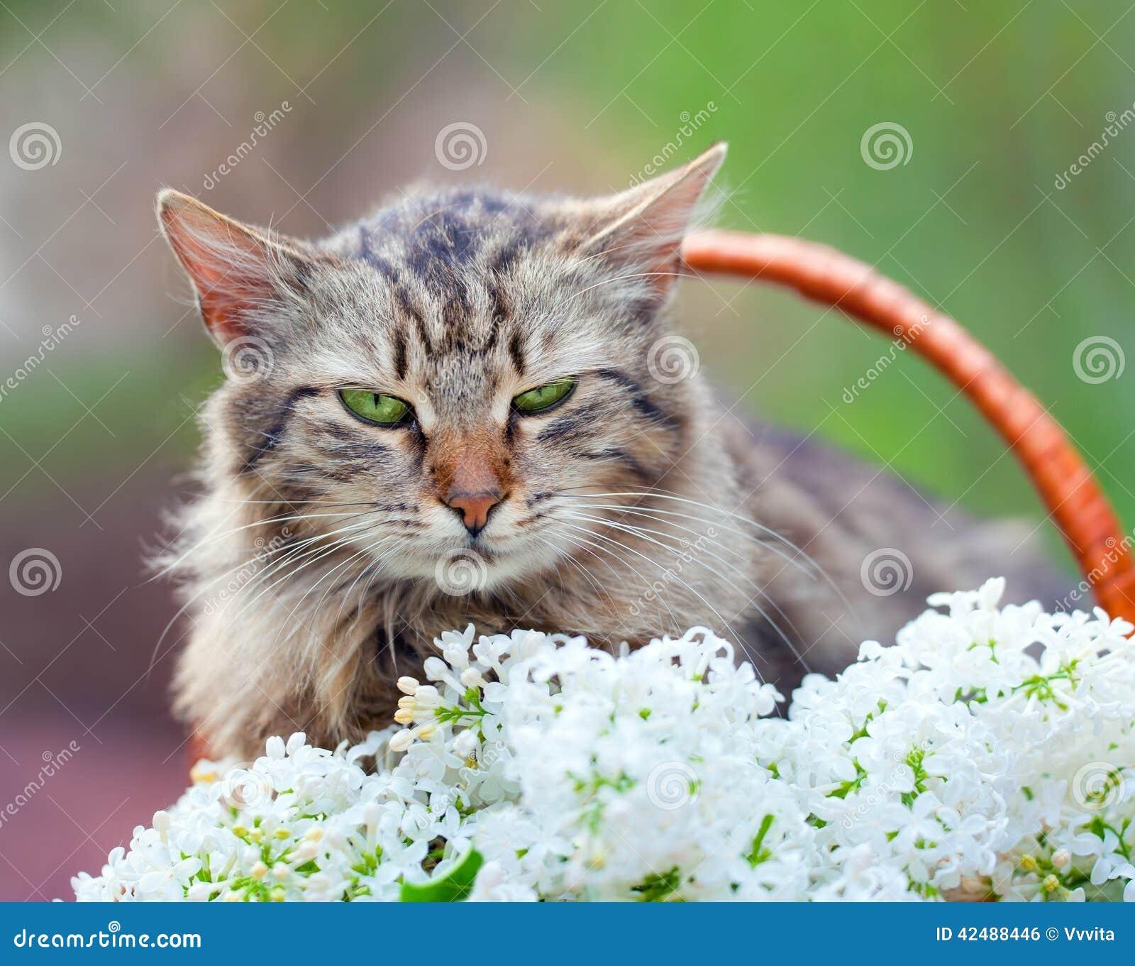 Panier Fleur Pour Chat : Chat dans un panier avec des fleurs photo stock image