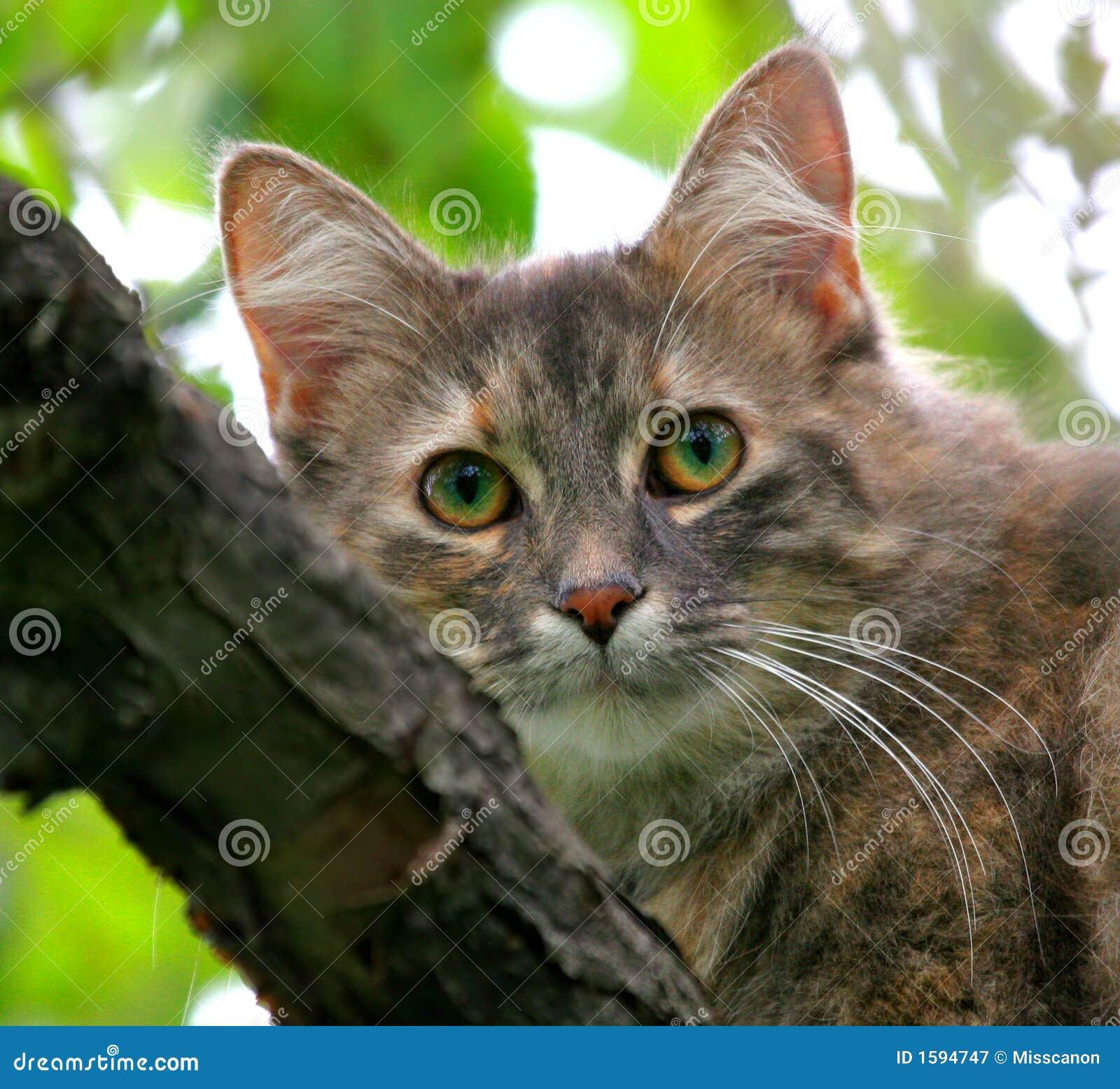 Chat dans un pommier
