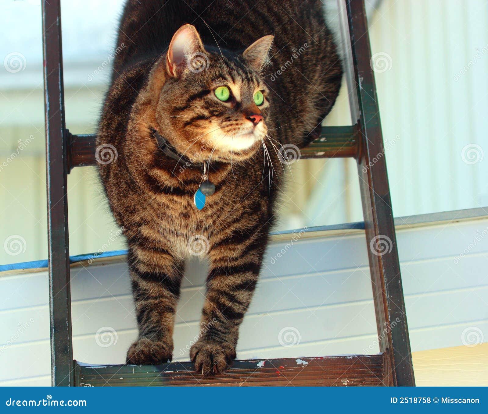 chat dans une chelle photos libres de droits image 2518758. Black Bedroom Furniture Sets. Home Design Ideas