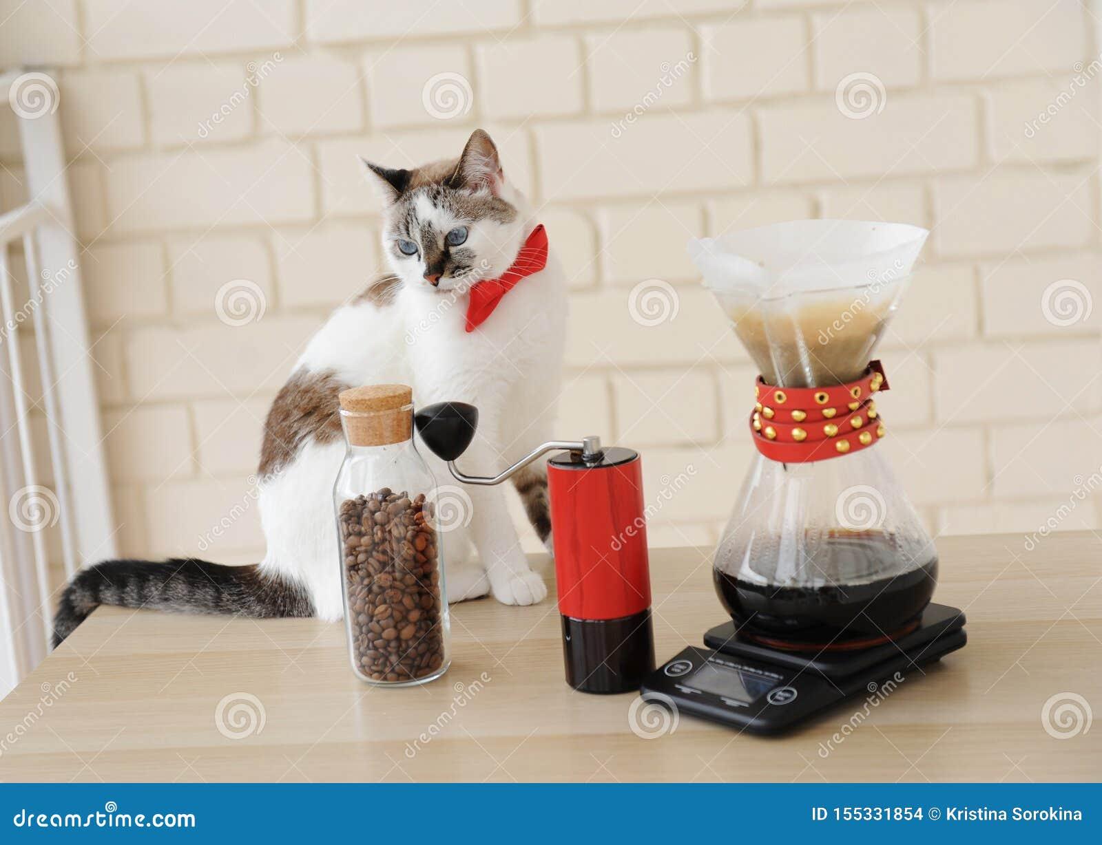Chat de barman Café manuel alternatif de brassage de main Filtre en lots d égouttement Rectifieuse de caf? rouge ?chelle ?lectron