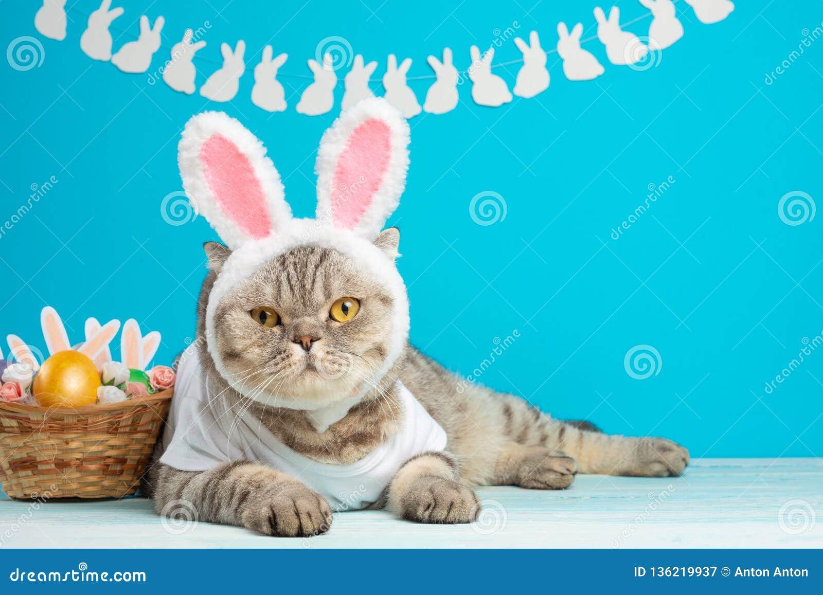 Chat de lapin de Pâques, mignons drôles avec des oreilles et des oeufs de pâques Fond et composition de Pâques