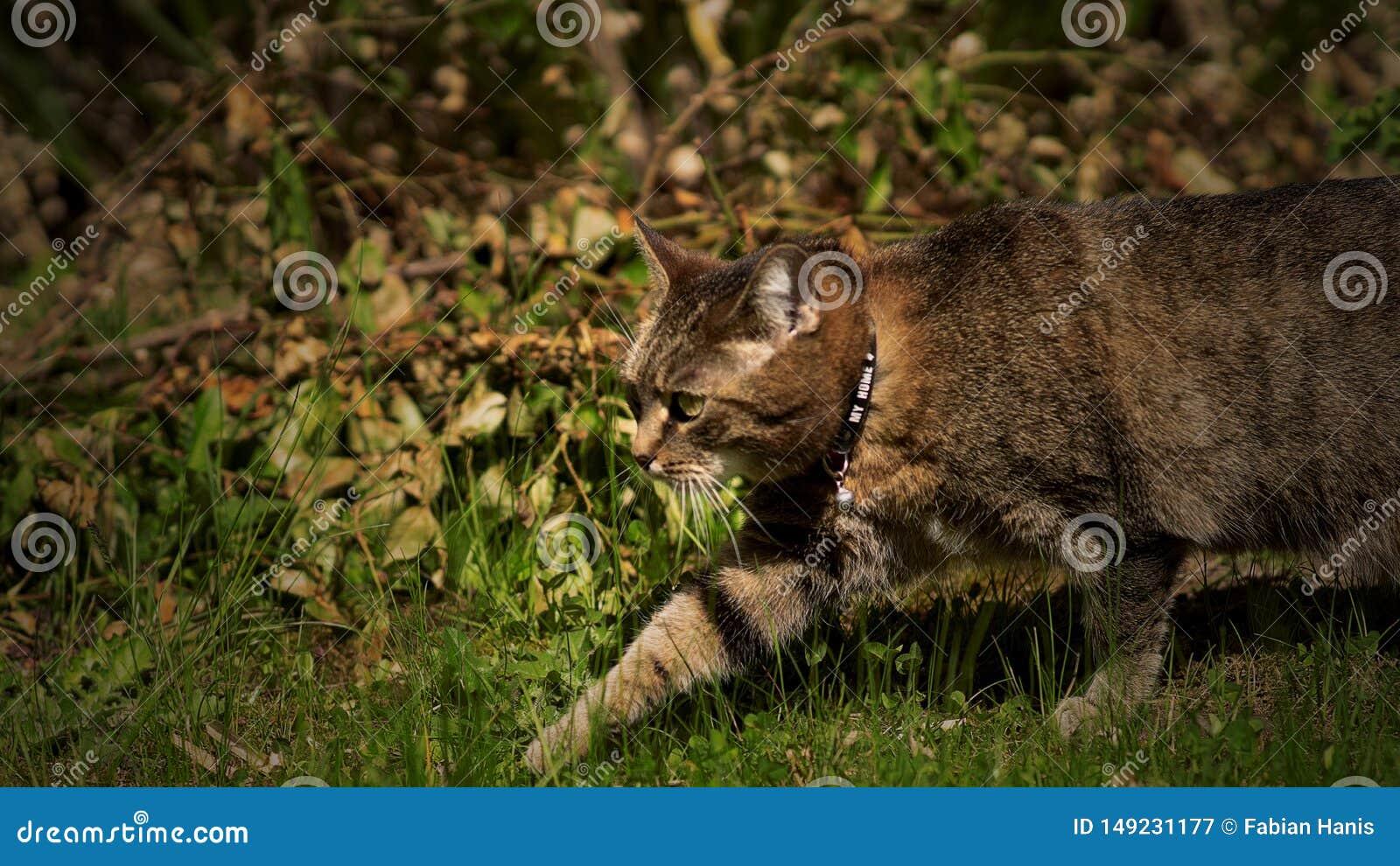 Chat de marche dans des gras verts