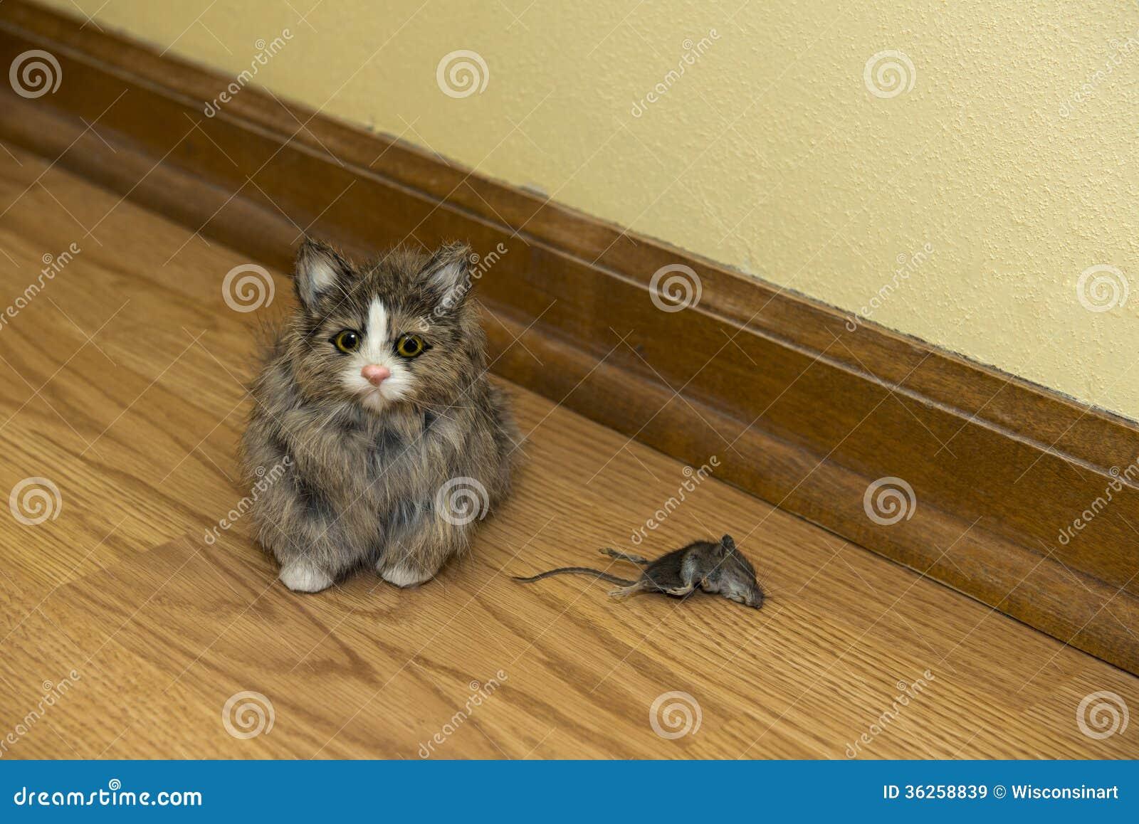 chat de petite chambre avec le rongeur mort de souris dans la chambre image stock image du. Black Bedroom Furniture Sets. Home Design Ideas