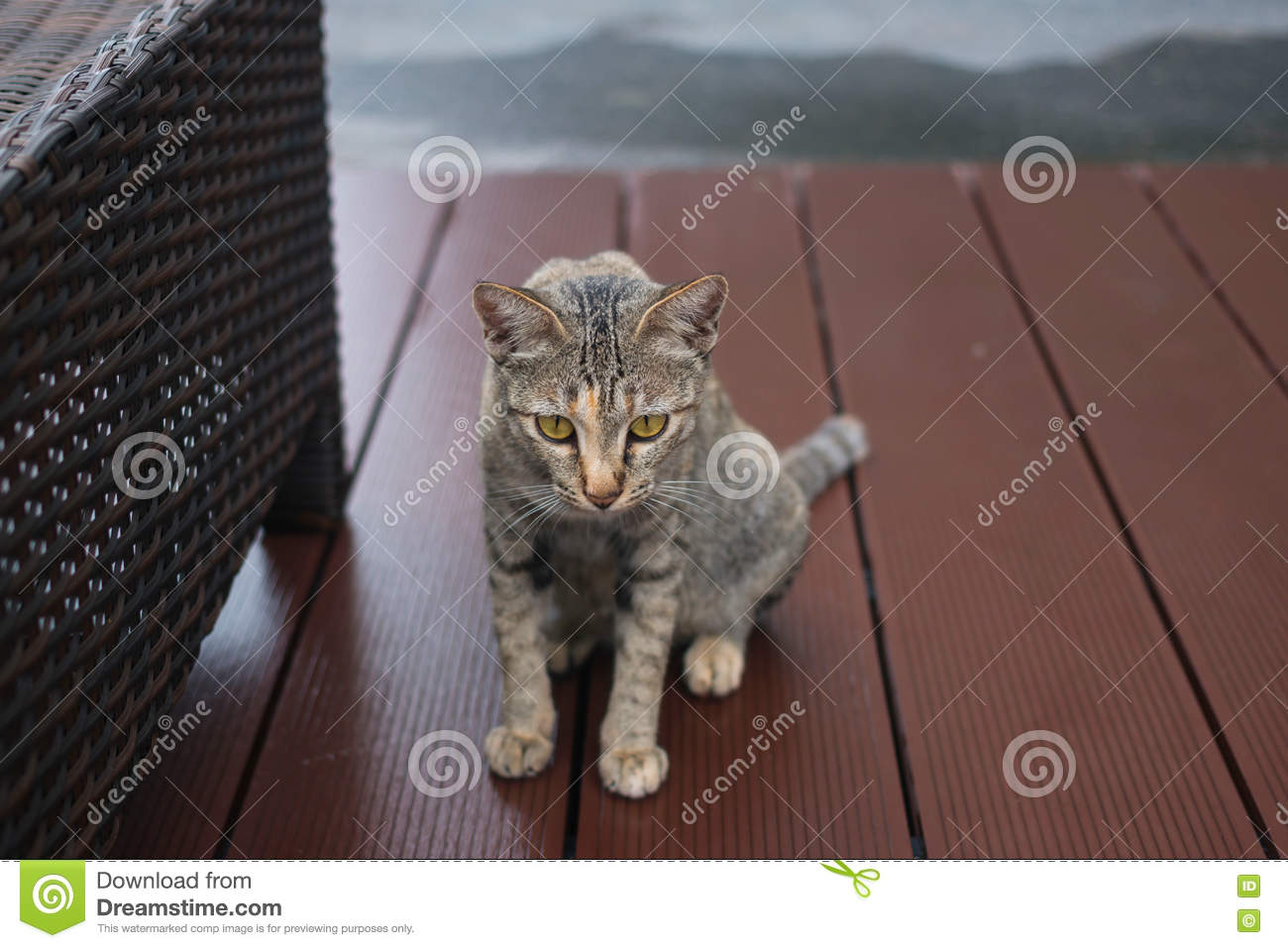 Chat de Tabby regardant l appareil-photo