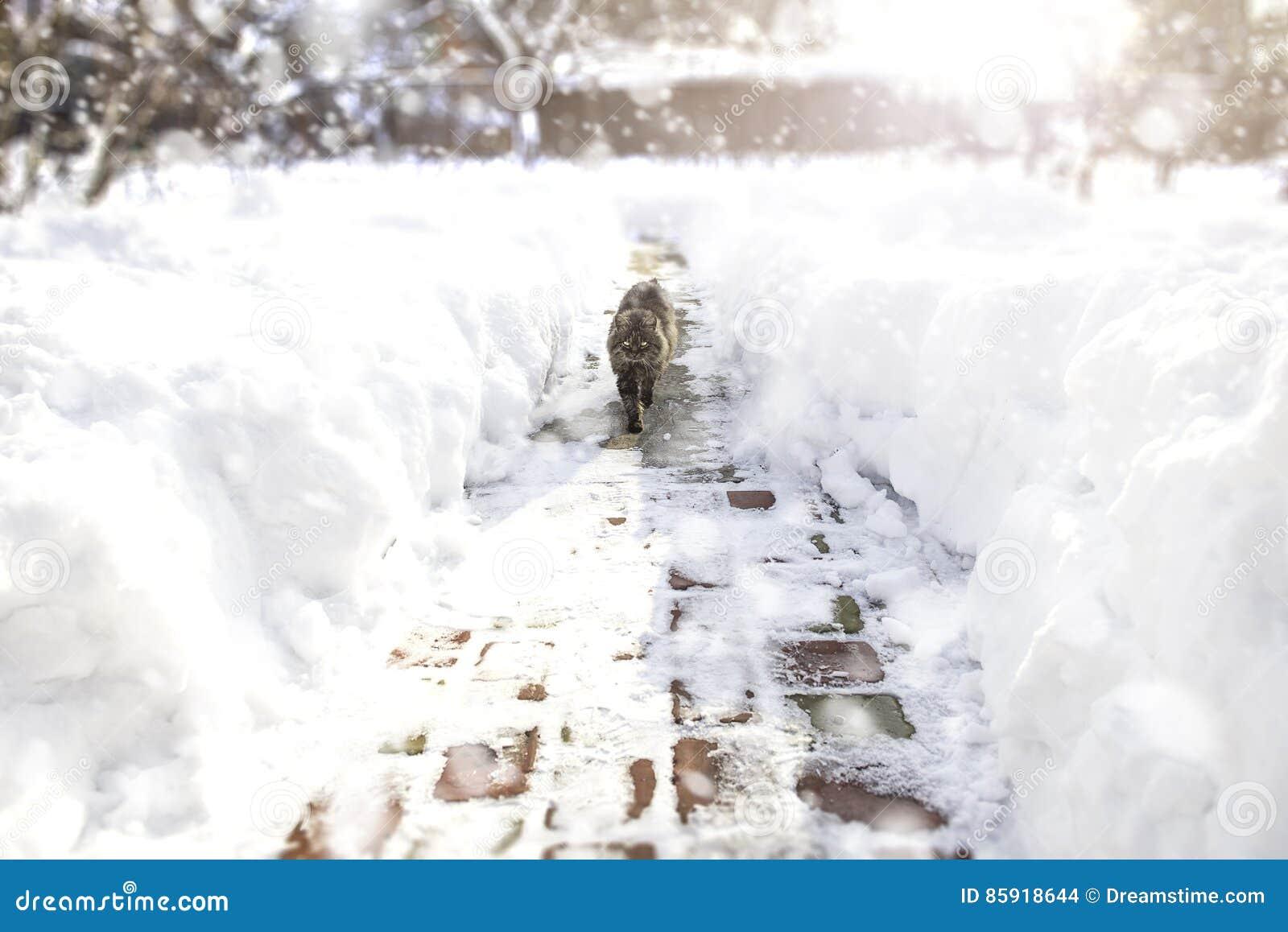 Chat descendant l allée pendant la tempête de neige Concept de l hiver