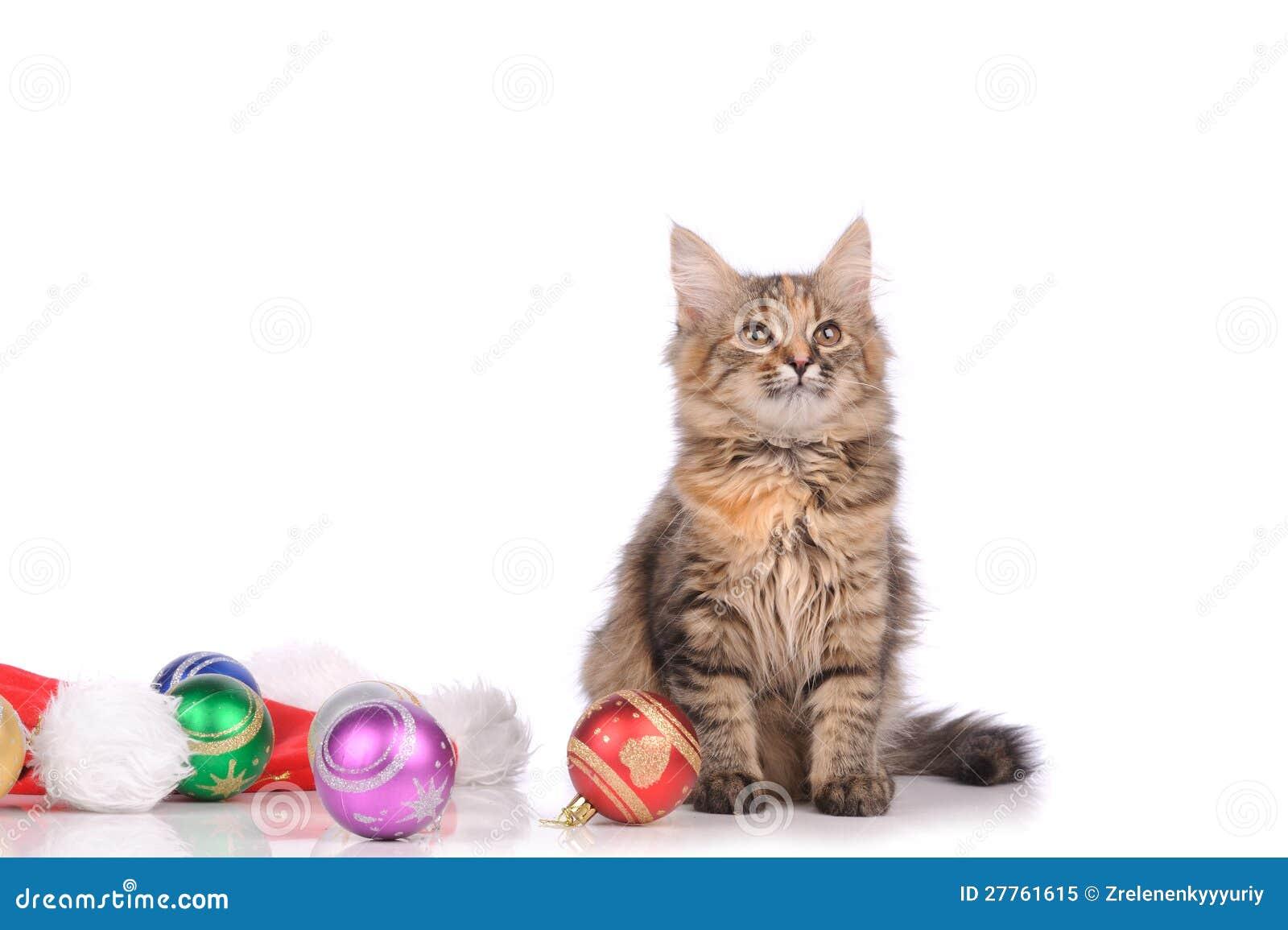 Chat drôle avec des jouets